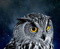Eagle Owl Royalty Free Stock Images