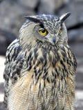 Eagle-owl Royalty Free Stock Photos