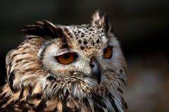 Eagle Owl Profile Stock Image