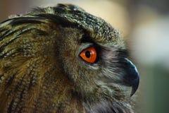 Eagle Owl Profile Portrait Lizenzfreie Stockfotos