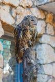 Eagle Owl se está sentando en un registro Imagen de archivo