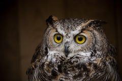 Eagle Owl sitzt auf dem Baumstumpf Stockfoto