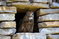 Eagle Owl on a stone shelter Royalty Free Stock Image