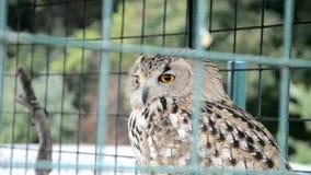 Eagle Owl in una gabbia archivi video