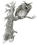 Eagle-owl (vector). Owl on a tree. Frightens of shout at night vector illustration