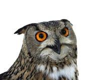 Eagle owl. On a white background Stock Photos
