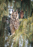 Eagle-owl. In winter hide Royalty Free Stock Photo