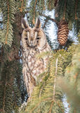 Eagle-owl. In winter hide Royalty Free Stock Photos