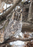 Eagle-owl. In winter hide Royalty Free Stock Images