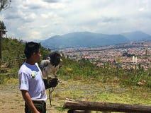 Eagle Perched dourado no braço do ` s do instrutor, gico Bioparque do ³ de Amaru Zoolà fotos de stock