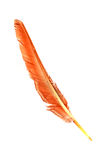 Eagle piórko Obrazy Royalty Free