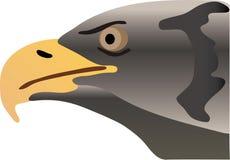 Eagle portrait Royalty Free Stock Image
