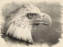 Eagle Portrait lizenzfreie stockfotografie