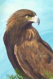 Eagle. Portrait of eagle/ digital painting / illustration Stock Photography