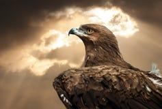 Eagle portret Zdjęcia Stock