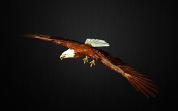 Eagle pose Royalty Free Stock Images