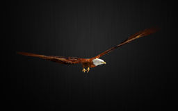 Eagle pose Stock Images