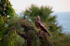 Eagle Pose em uma praia fotos de stock