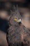 Eagle Posing Stock Photo
