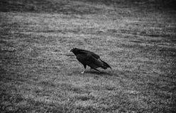 Eagle protegido foto de archivo libre de regalías