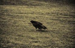 Eagle protegido fotografía de archivo