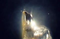 Eagle que está em uma rocha, conceito animal abstrato imagem de stock royalty free