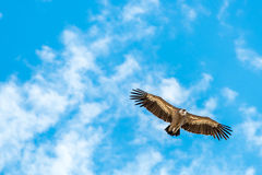 Eagle que se eleva contra nubes y un cielo azul Imagenes de archivo