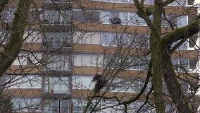 Eagle Raiding Heron Nest 4K. UHD. A Bald Eagle raiding a Great Blue Heron nest in a rookery. 4K. UHD stock video footage