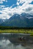 Eagle River Nature Center en Alaska Foto de archivo