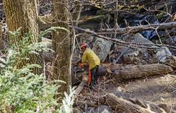 Clearing the Trail of a Fallen Pine Tree Royalty Free Stock Photography