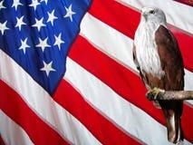 Eagle ROSSO impostato contro la bandiera americana. Fotografia Stock