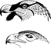 Eagle's head. Available in high-resolution and several sizes to fit the needs of your project Stock Photos