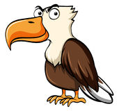 Eagle with serious face. Illustration Royalty Free Stock Photos