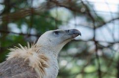 Eagle. The sharp eye of an eagle Stock Photo