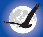 Eagle silhouete over moon Stock Image