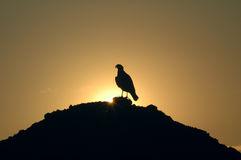 Eagle silhouette. An eagle silhouette in the sunset stock photography