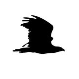 Eagle silhouette Stock Images