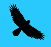 Eagle silhouette. Silhouette of the bird of prey soaring in the blue sky Stock Image