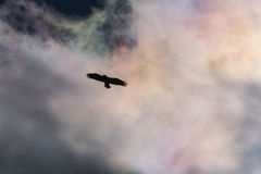 Eagle Silhouette calvo Fotografia Stock Libera da Diritti