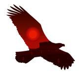 Eagle Silhouette e paesaggio occidentale del deserto Fotografia Stock Libera da Diritti