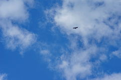 Eagle silhouette. Eagle flying against a beautiful cloudy blue sky Stock Photo