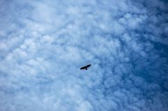 Eagle silhouette flying against the sky. Feeling of freedom Royalty Free Stock Photography