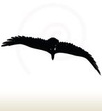 Eagle silhouette Royalty Free Stock Photos