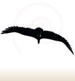 Eagle silhouette Royalty Free Stock Photos