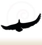 Eagle silhouette Stock Photos