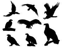 Eagle-silhouetten Royalty-vrije Stock Foto's