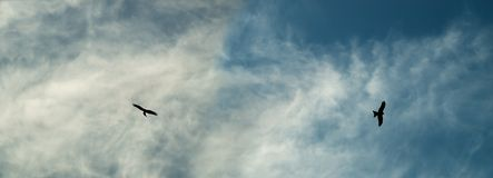 Eagle silhouettes soar over cloudy sky Royalty Free Stock Photos