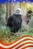 Eagle Sitting auf Niederlassung mit amerikanischer Flagge Stockfotografie