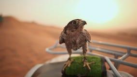 Eagle Sitting Cámara lenta almacen de video
