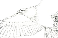 Eagle Sketch Royalty Free Stock Photos